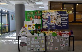 La Semaine des sciences et du développement durable-13