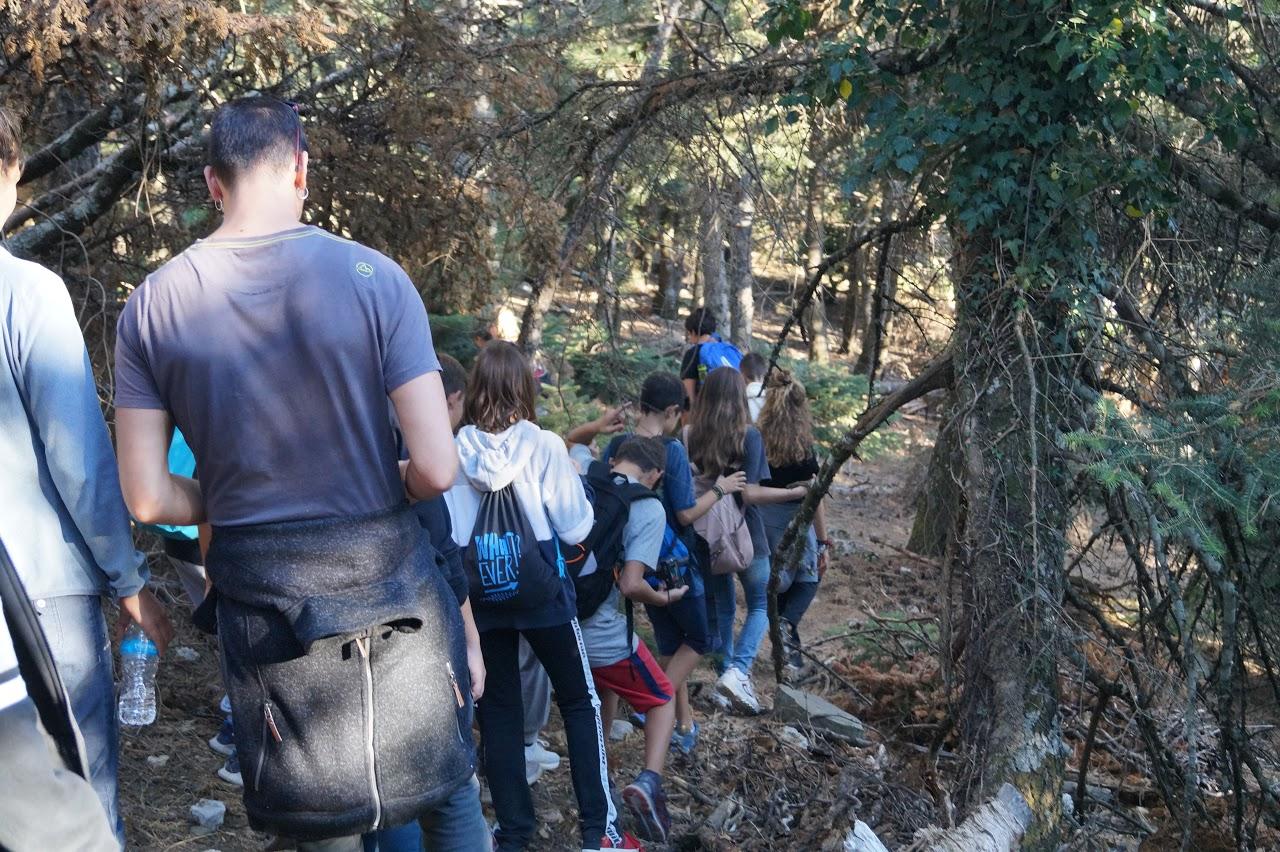 Sortie des élèves de A' Gymnase au parc national de Parnès-4