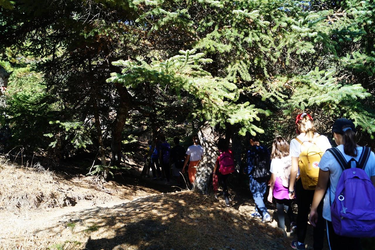 Sortie des élèves de A' Gymnase au parc national de Parnès-8