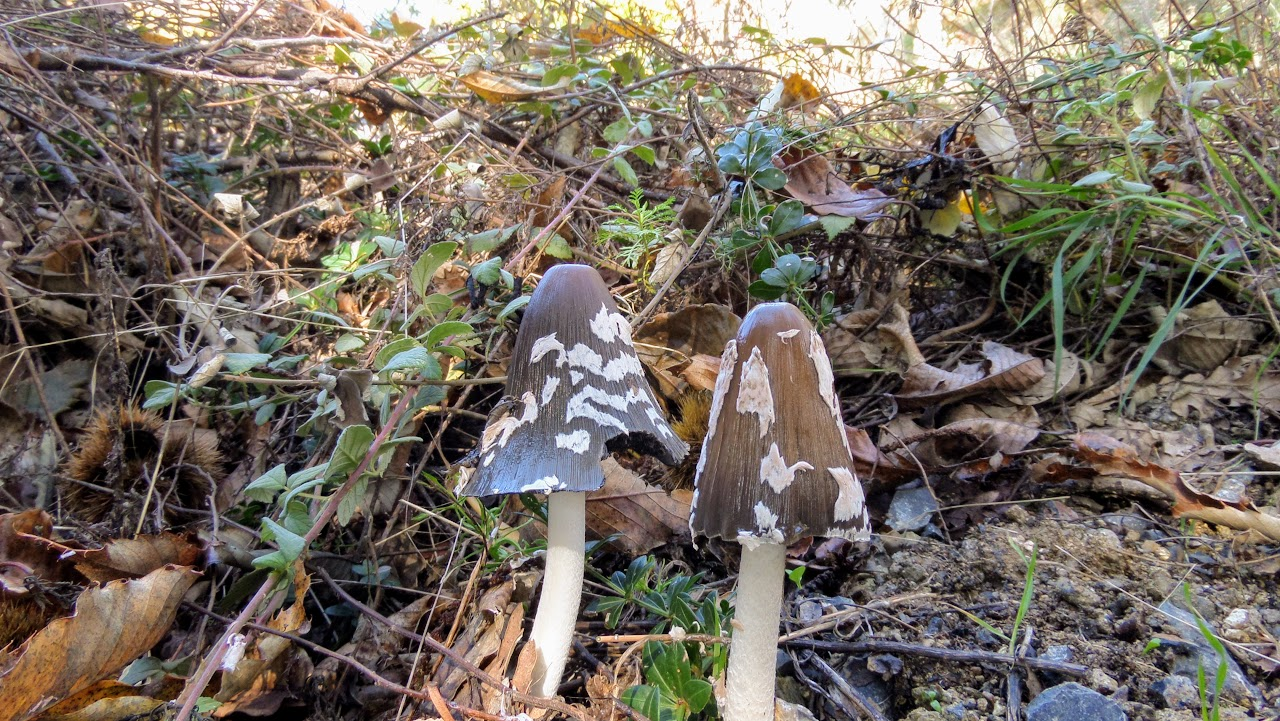 Camps d'automne 2018 : Découverte de la montagne et écotourisme à Karies Lakonias-7